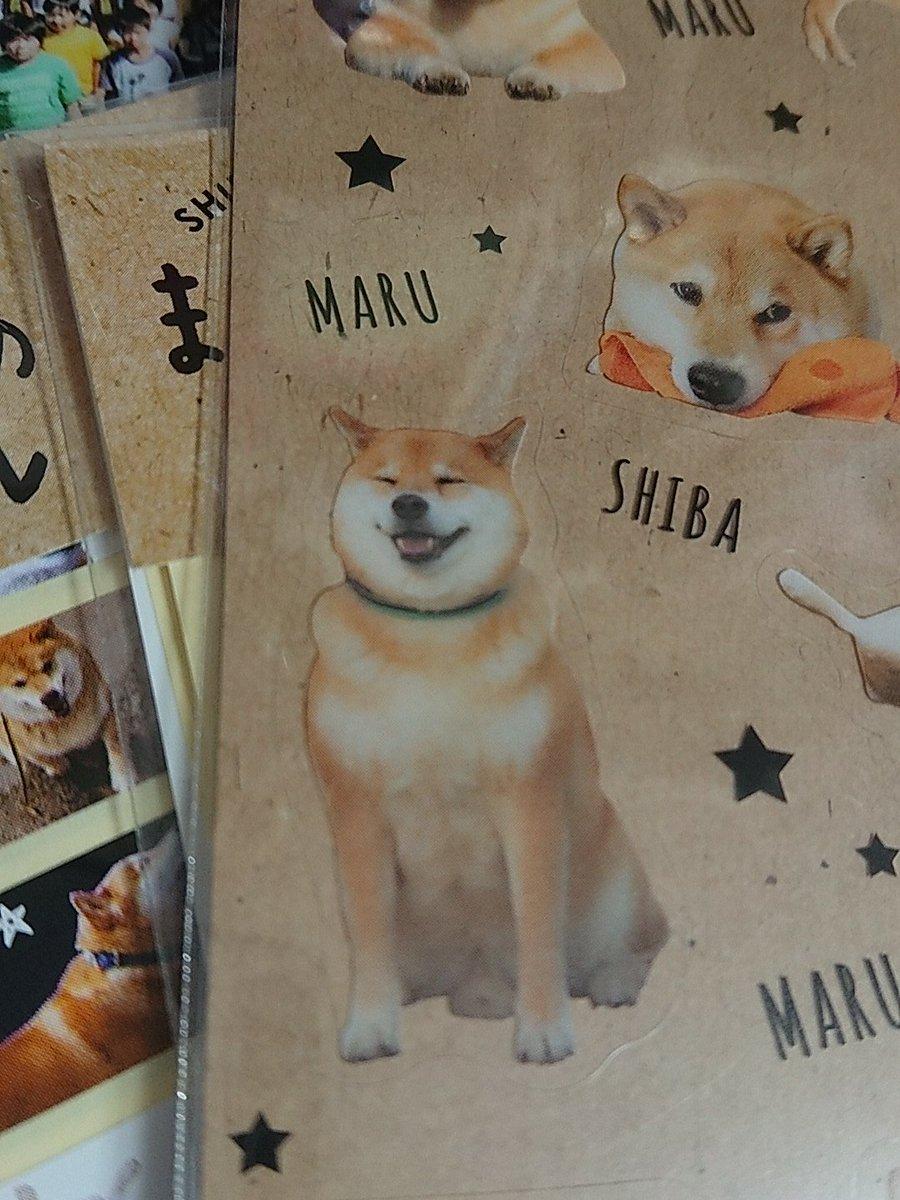 test ツイッターメディア - #犬の日 #柴犬まる #キャンドゥ   キャンドゥでいいもの見つけた…ついつい全種類のシールを買ってしまった…?? https://t.co/ACHTEz5otW