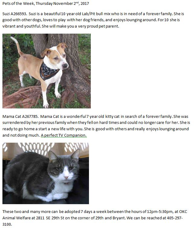 Okc Animal Welfare On Twitter Pets Of The Week Thursday November