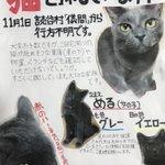 ファンのコの猫ちゃんがいなくなってしまいたした…見かけた方、保護した方コメントよろしくお願いします。…