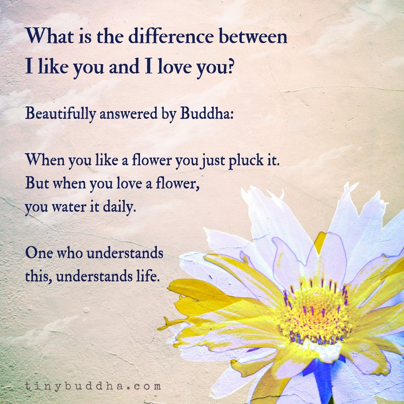 what is difference between like and love