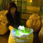 世界初! 緑に光る繭を量産 前橋の養蚕農家 sankei.com/life/news/1711… p…
