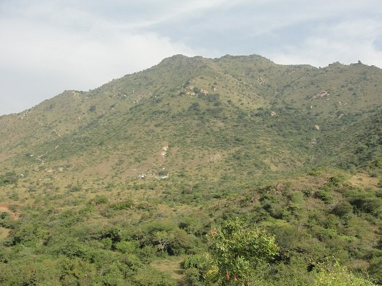 11.4% of most rare #TreeSpecies of India&#39;s #EasternGhats are on the verge of extinction; fear #researchers <br>http://pic.twitter.com/q3KurzfW2V
