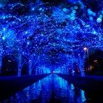 「青の洞窟」他都市で特別開催決定 - あなたの1票で決まる!?渋谷以外の開催地 fashion-pr…