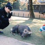 奈良やっぱええな。photo by viola pic.twitter.com/B7H8xNrq1I