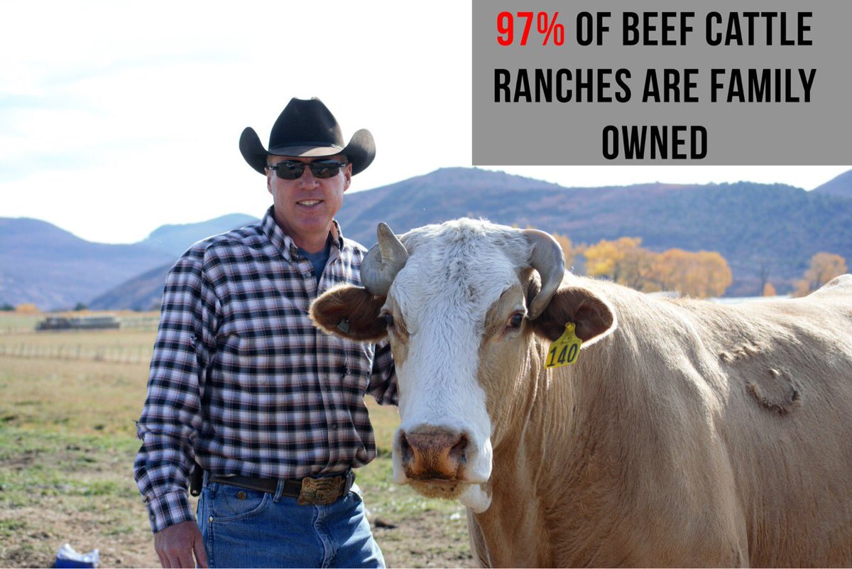 My #familyfarm is part of that 97%! (He won&#39;t admit it but Sugar is definitely dad&#39;s fav #cow!) #BarGCattleCo #CAO17 #AgProud #FamilyOwned<br>http://pic.twitter.com/BR7ZRiofwo