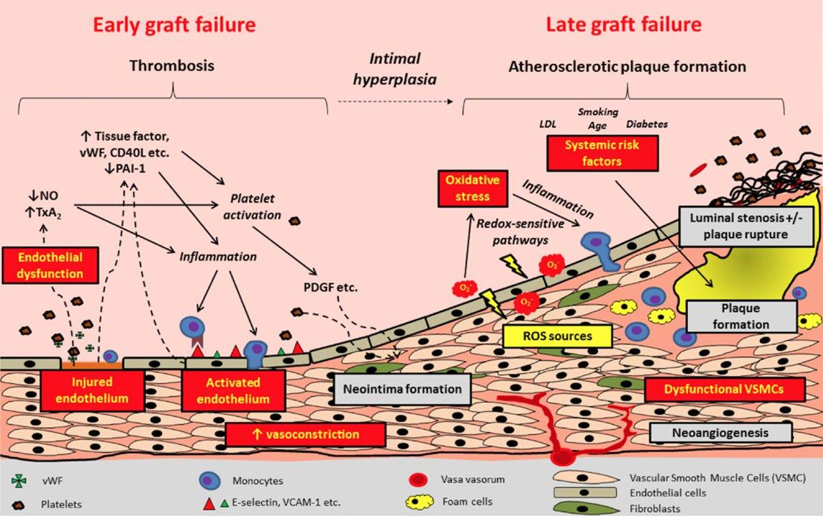 ebook stress analysis of cracks
