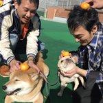 クルちゃん…笑 pic.twitter.com/h8X3rCtsPh
