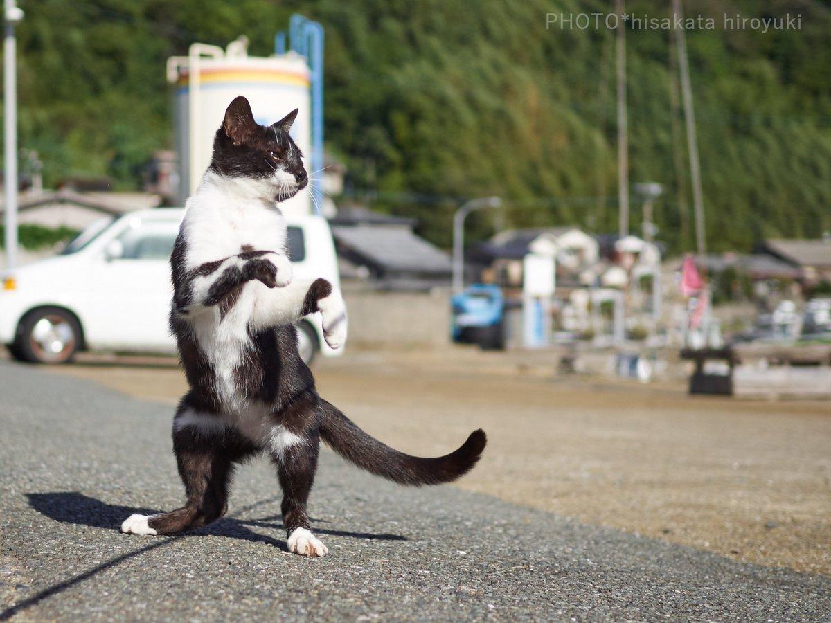 ゆらりとした構えから一気に躍動する黒白猫拳