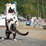黒白猫拳がかわいい!ゆらりとした構えから一気に躍動する猫!