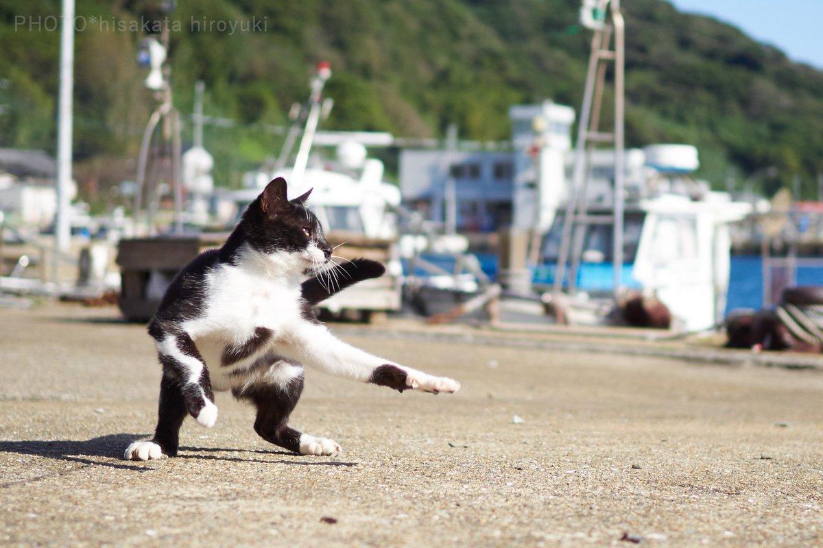 黒白猫拳がかわいいwwwゆらりとした構えから一気に躍動する猫!