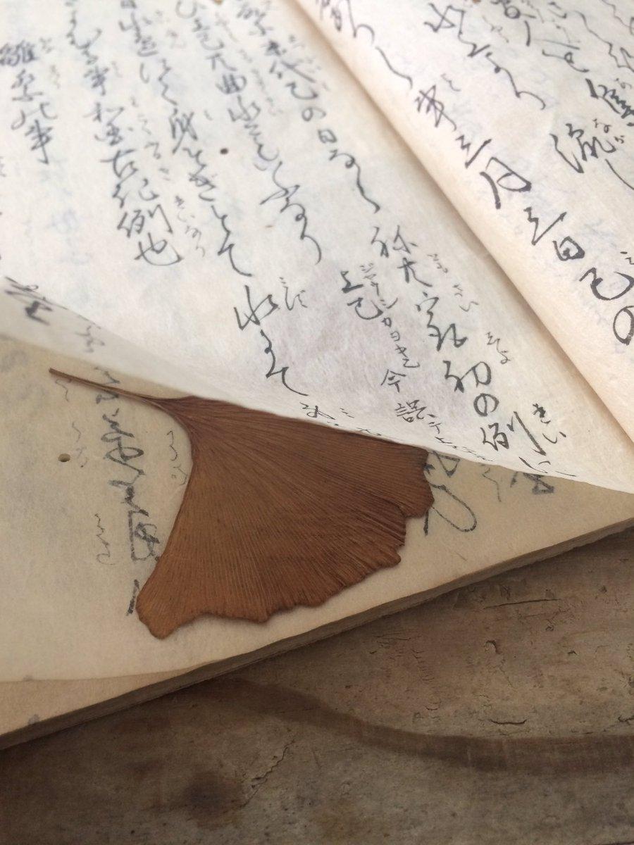 これは風流な…古書にイチョウの葉が挟まっている秘密
