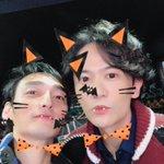 ゴロ猫!#ユーチューバー草彅 #ホンネテレビ pic.twitter.com/wnOaDGHYQw