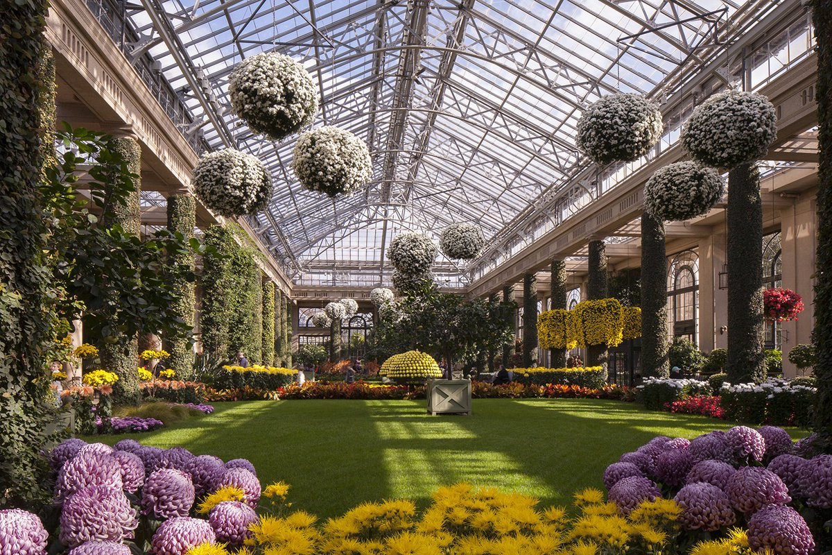 ... In The Conservatory This Saturday Https://longwoodgardens.org/events And Performances/events/discover Chrysanthemum Festival  U2026pic.twitter.com/m58sAHsvog