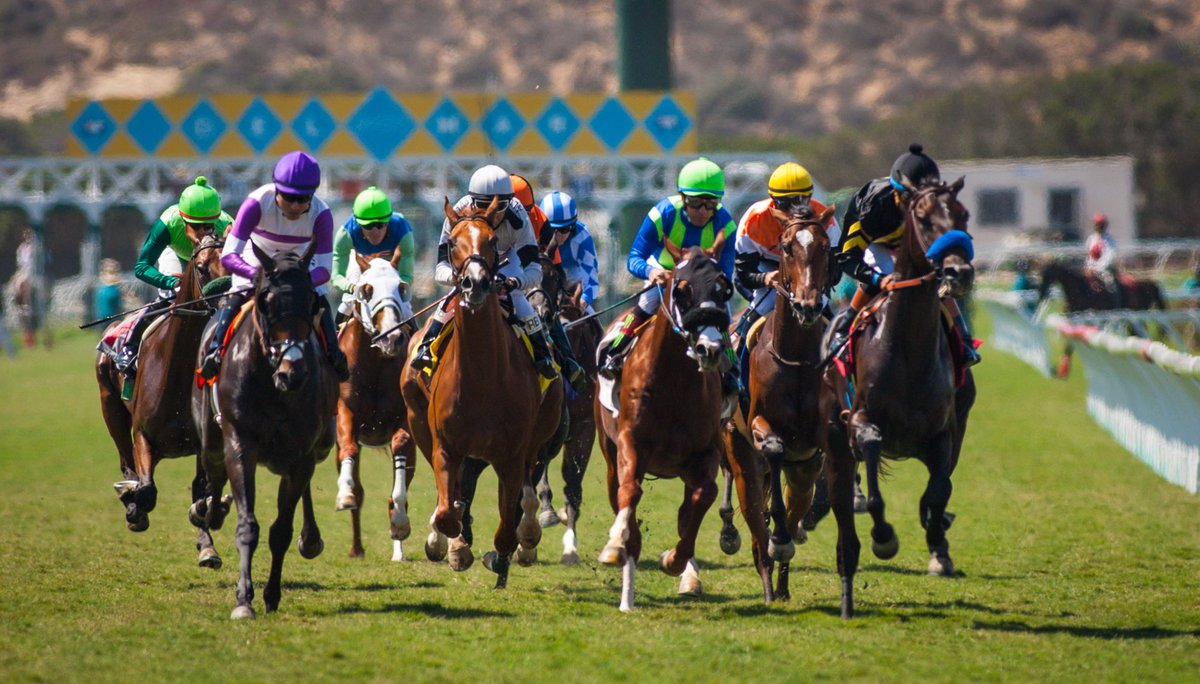 Horse betting tips for beginners college bowl game betting trends