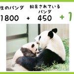 「1800」野生に生息するパンダの数。「450」野生のパンダを守り増やすために飼育されているパンダの…