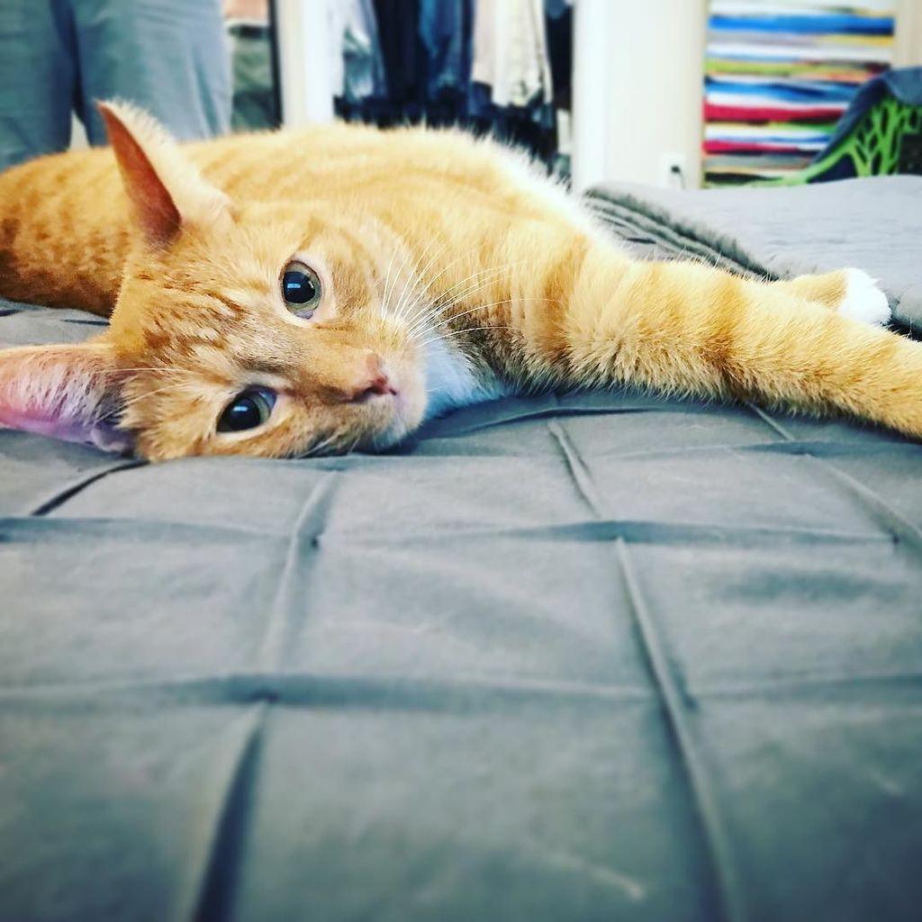 cat hashtag on twitter