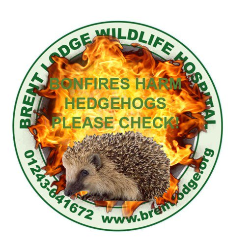test Twitter Media - Planning a #BonfireNight2017 this weekend please keep an eye out for #hedgehogs. Bonfires provide ideal sleeping places so please check. 🔥💥🦔 https://t.co/hmlwp6a8Se
