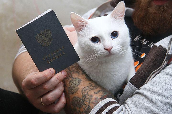 кот показывает факью картинки