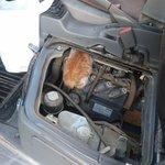 さっき車から子猫の鳴き声したから たたいてもゆすっても出てこないから 直接見たらいたw 商業車はボンネットたたいても エンジンは座席の下にあるから、 座席を叩くか直接見ないとダメかも。 寒くなってくるから気を付けないと。 #猫バンバンプロジェクト  #猫バンバン