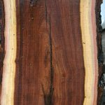 """Word of the day: """"heartwood"""" - the dense, durable interior of a tree's trunk, often more richly coloured than the surrounding """"sapwood"""". Metaphorically, the deep-set aspects of a person, their inner core."""
