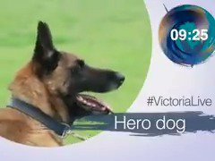 RT @VictoriaLIVE: Today's @VictoriaLIVE with @TinaDaheley ▪ Zimbabwe latest ▪ Christmas cons ▪ Mali the hero dog https://t.co/TZxvwAz2Iv