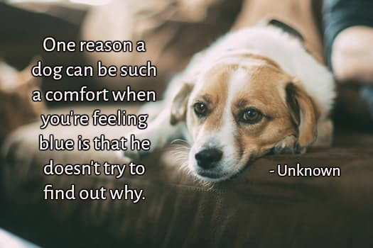One reason a dog can be such a comfort when you're feeling blue is that he doesn't try to find out why.—Unknown #quote <br>http://pic.twitter.com/fPU93eMSNf