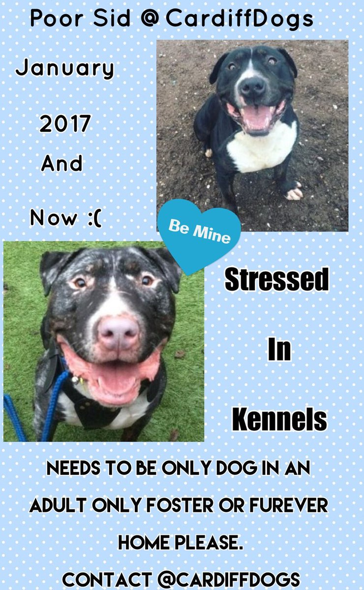 #Fridayfeeling #Beeyootiful boy ready &amp; waiting on a loving home #Sad #stressed in kennels plz rt all info @CardiffDogs<br>http://pic.twitter.com/v2fYejhJqM