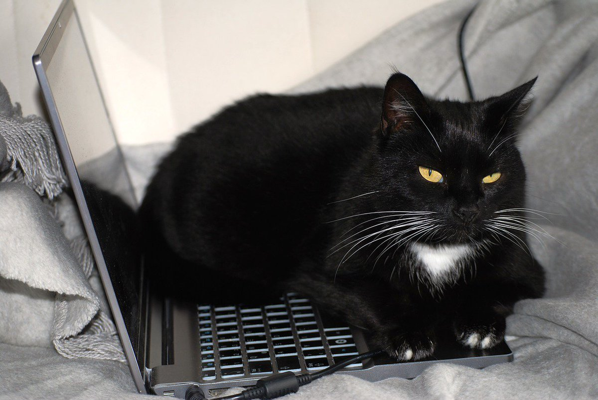 Did you know we have an Ebay shop?  You can see the items we have on sale by visiting  http:// stores.ebay.co.uk/sheffieldcatss helter/ &nbsp; …  (If you can get to your laptop....) #cats #charity #sheffieldissuper <br>http://pic.twitter.com/26rioweyNv