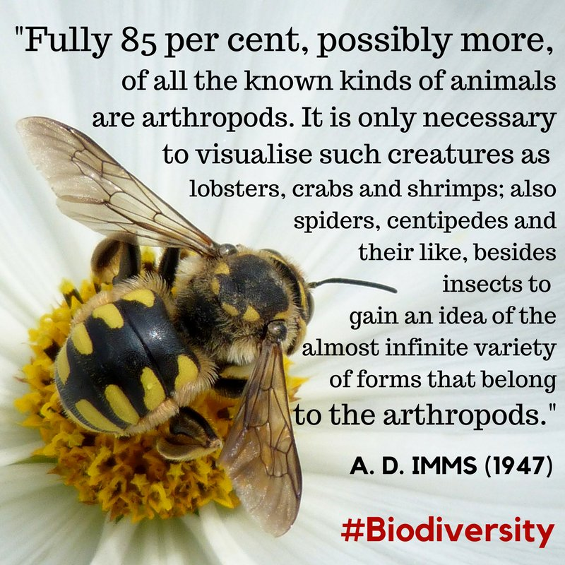 Global ecology is so dependent upon the rich diversity of arthropod species; from multitudinous insects to the predatory diversity of spiders and their kin. All arthropods matter, yet we still have so very much to learn about most. #Biodiversity #Ecology <br>http://pic.twitter.com/v41zcxuRD1