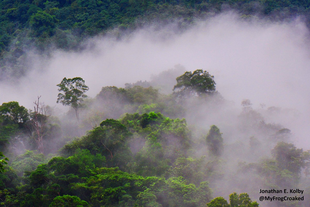 Few places are better than a #frog-filled cloud #forest!  One of my favorite things about working at the #HARCC-Honduras Amphibian Rescue &amp; Conservation Center field site! #FrogFriday #FridayFeeling @HondurasARCC<br>http://pic.twitter.com/rHfsMcTssi