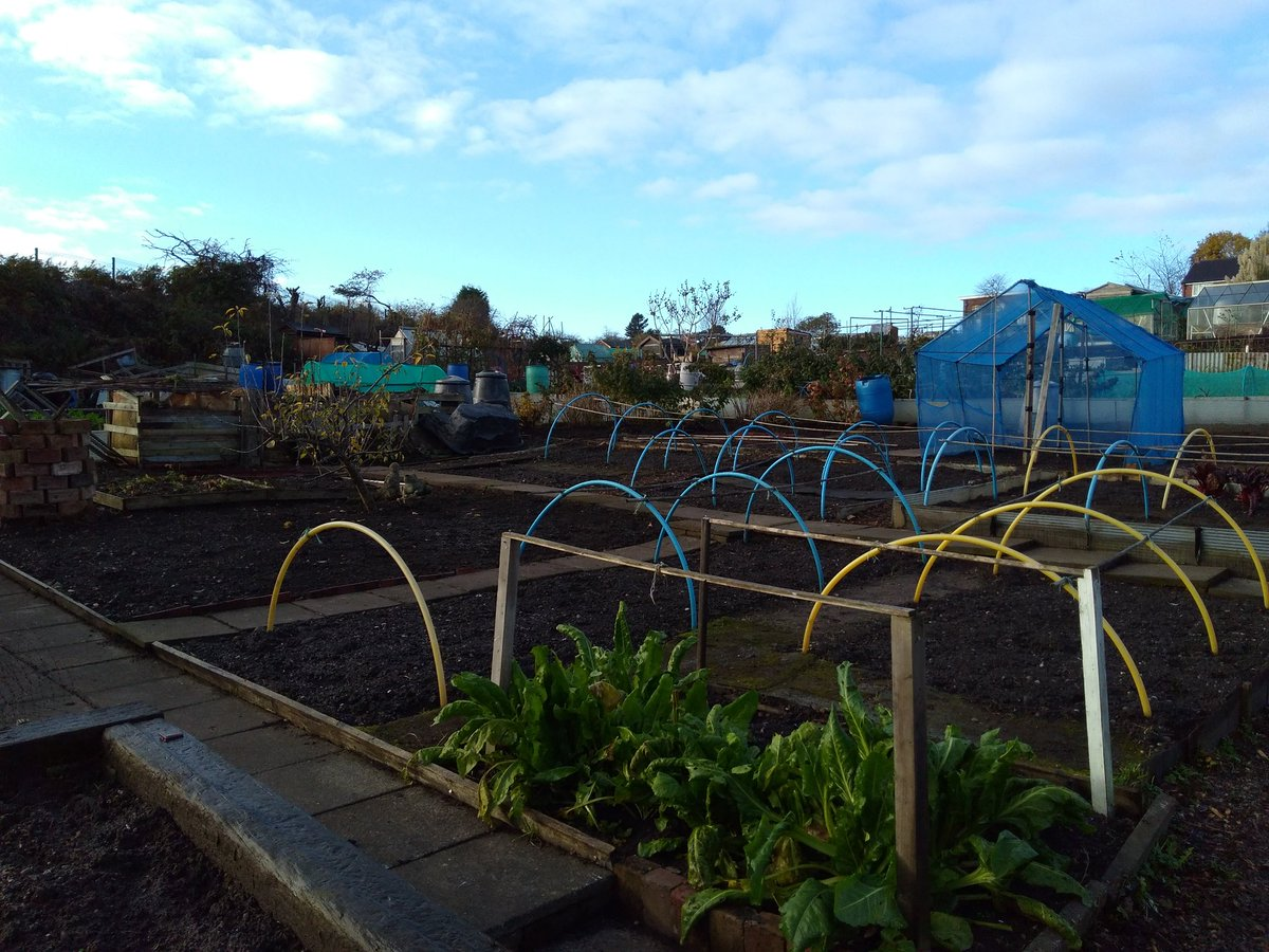 Early morning on #plot15 weather is beautiful, slight hint of a frost. Think I&#39;m winning the weed war, so far... #allotment <br>http://pic.twitter.com/B7YgyOEC3N