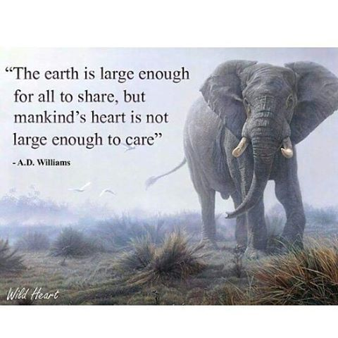 Let your heart be large enough to care. #ZeroWaste #EcoFriendly <br>http://pic.twitter.com/v9l3NO7Nuf