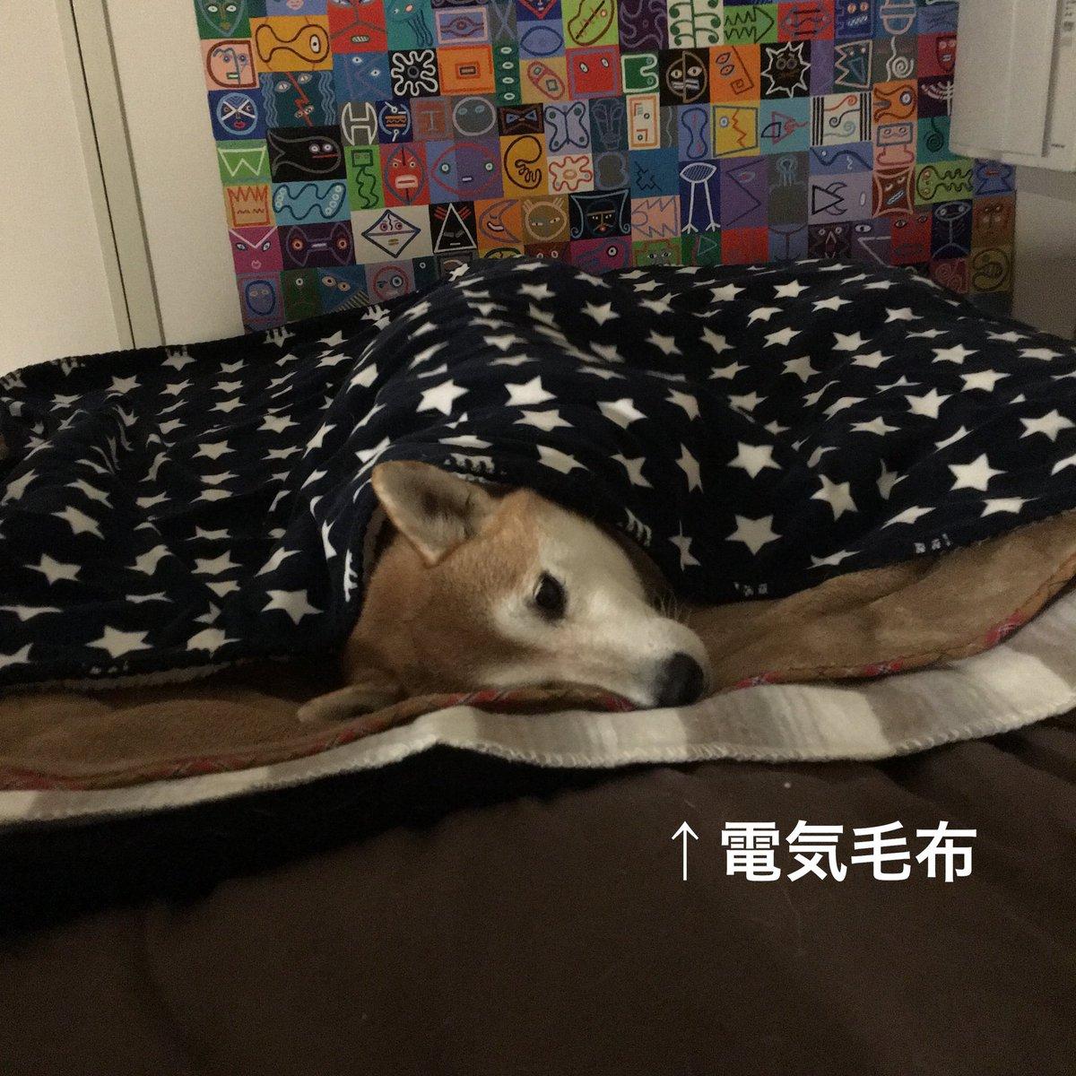 きみ前評判と違わない?柴犬は日本の気候に慣れており寒さに強く飼いやすい犬種?