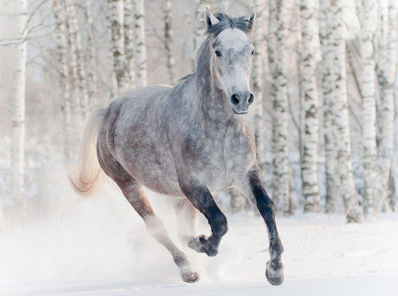 100warhorses photo