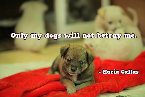 Only my dogs will not betray me.—Maria Callas #quote <br>http://pic.twitter.com/zh5qyY92vC