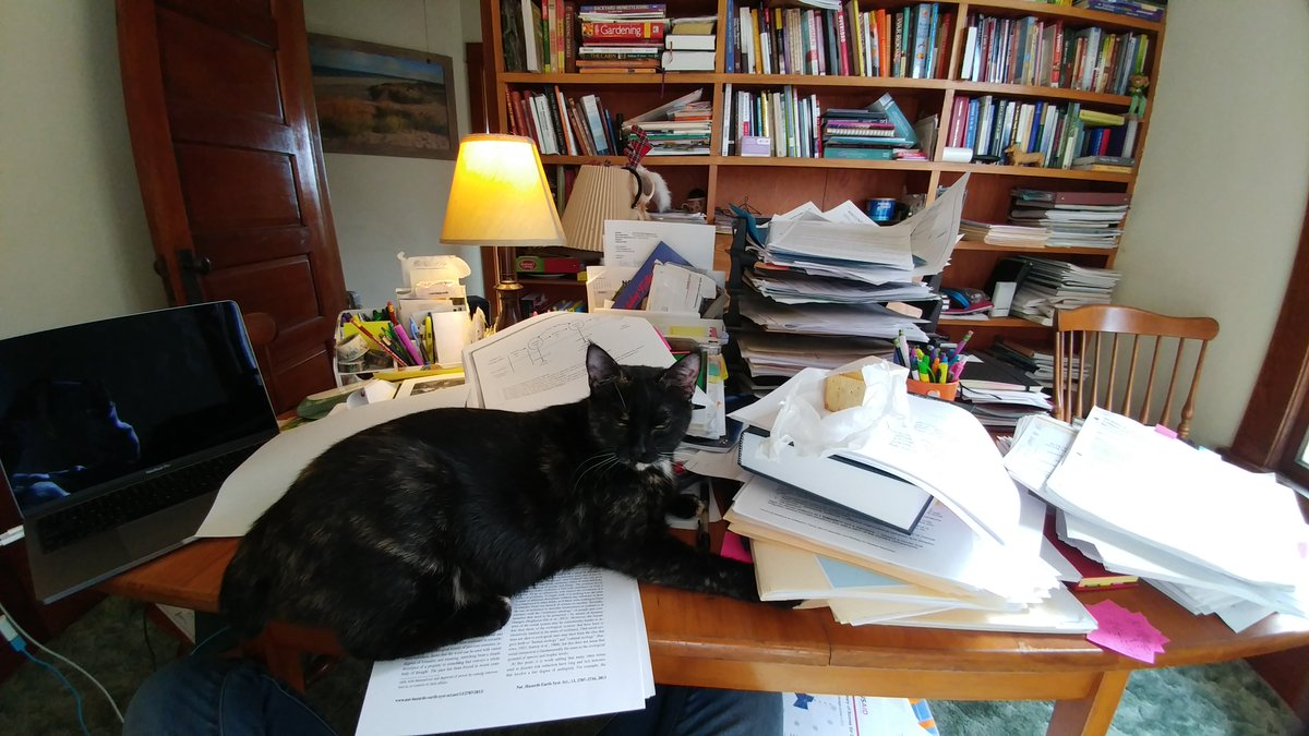 #academicswithcats #thesis #AcWri halted by #cat sigh.... #thestruggleisreal #academia<br>http://pic.twitter.com/pLNE2BRwuJ