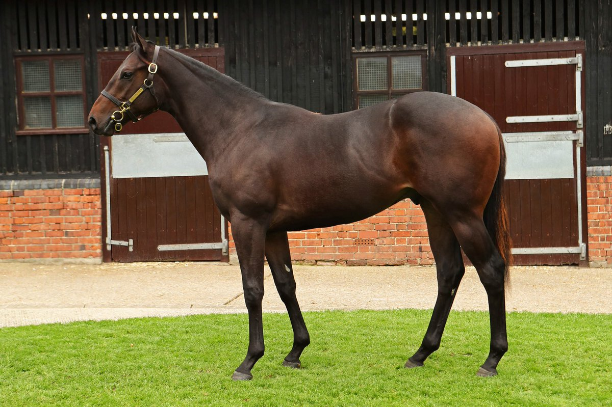 We have just a few shares remaining in the Ganton Hall syndicate and this stunning son of Garswood out of Topflightcoolracer to be trained by @RichardFahey. Phone 01488 669166 for more details!
