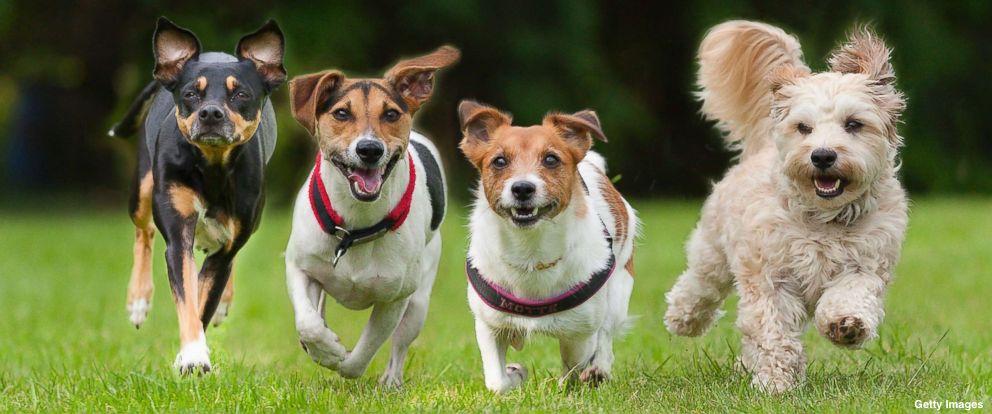 Bolivian Dog Breeds