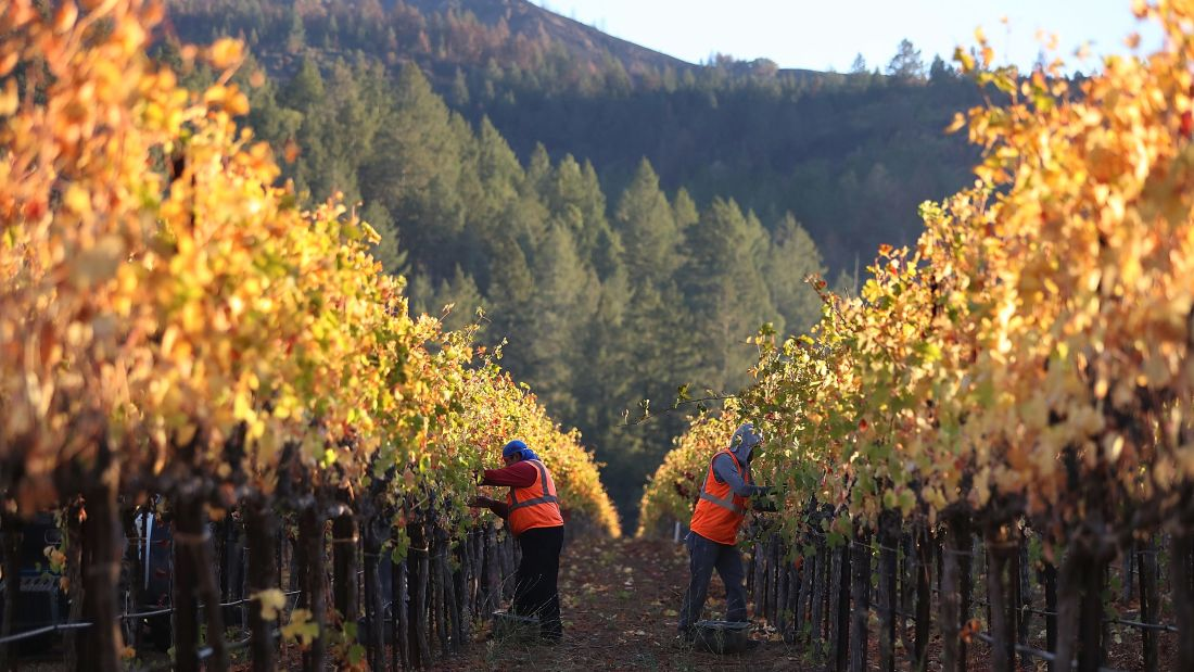 #California #wine country to tourists: Please return  http:// cnn.it/2hzdz8V  &nbsp;   #Fire #Travel #Wineries<br>http://pic.twitter.com/UArRX4ojg9