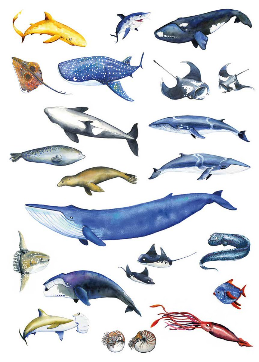 Should I make more sea creature posters &amp; prints?   #watercolor #illustration #sciart #ocean #whale #shark #fish #kidlitart<br>http://pic.twitter.com/rKAiiNiCzy
