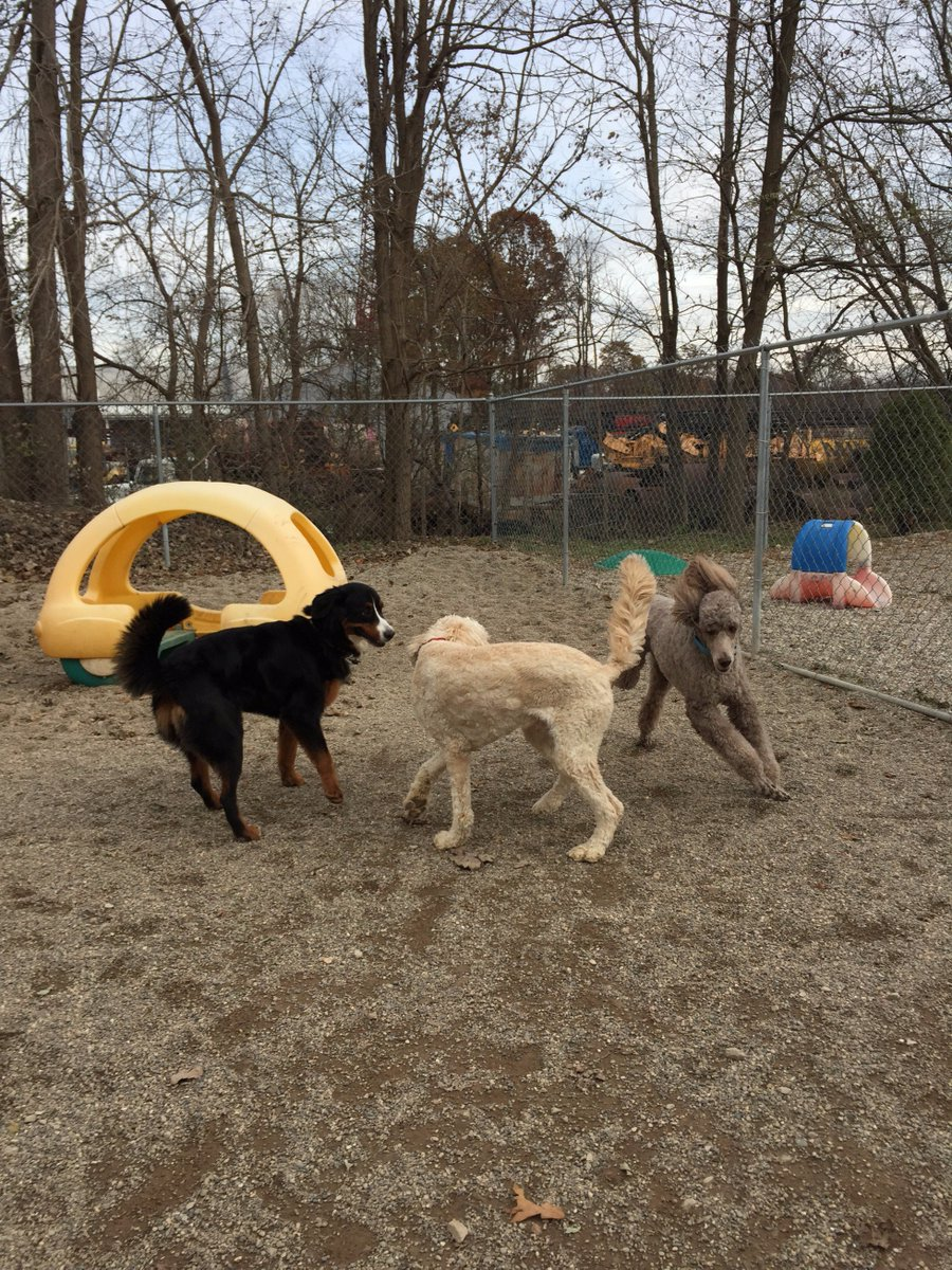 Teddy, Riley H. and Zooey play ring around the rosie