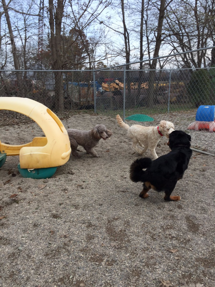 Teddy, Riley H. and Zooey race across the yard