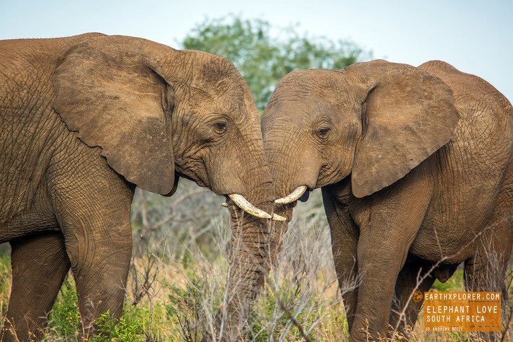 Only shoot with cameras!    #BeKindtoElephants  #travel #adventure<br>http://pic.twitter.com/cto7u5MtO6