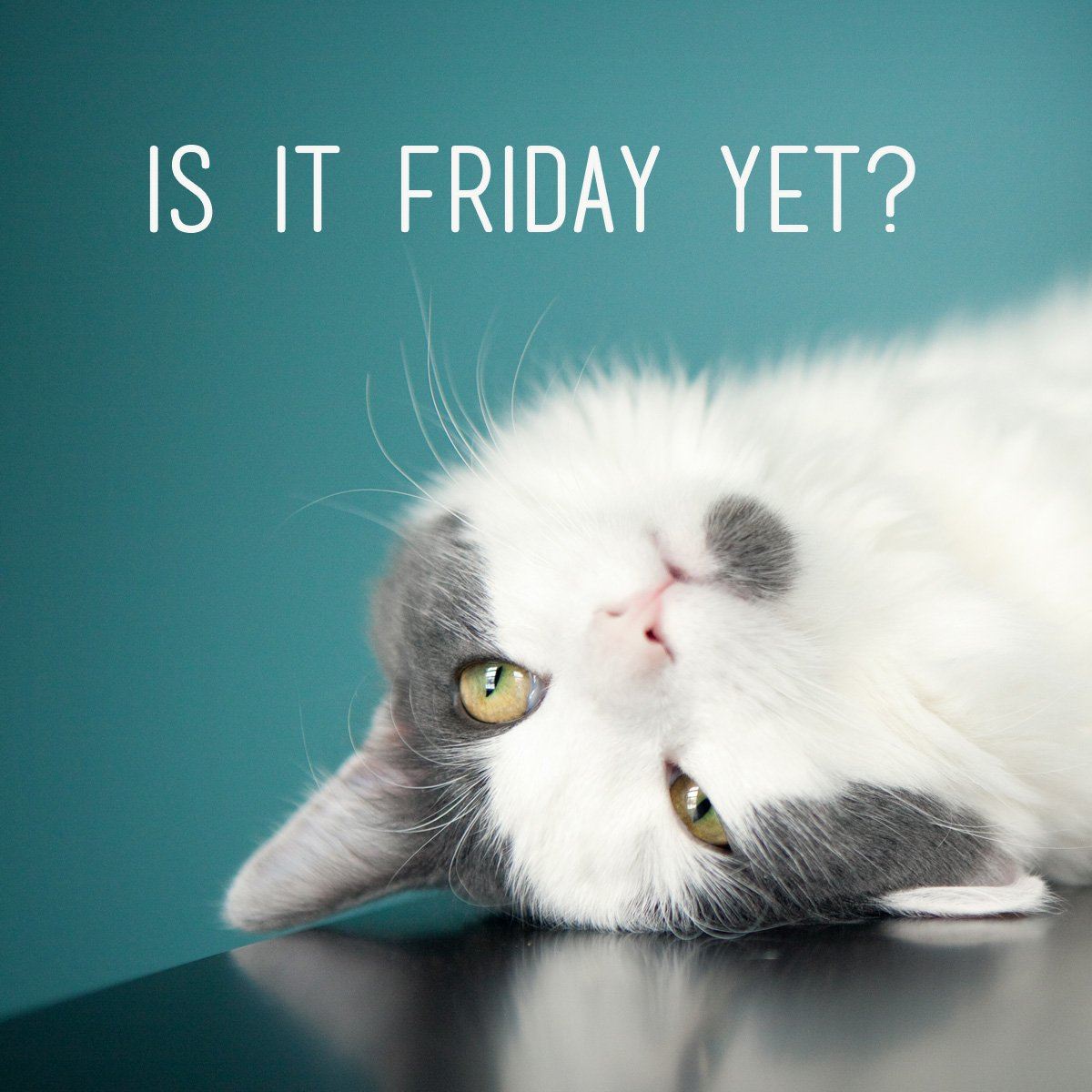 Yes, it's Friday! Have a great weekend e...