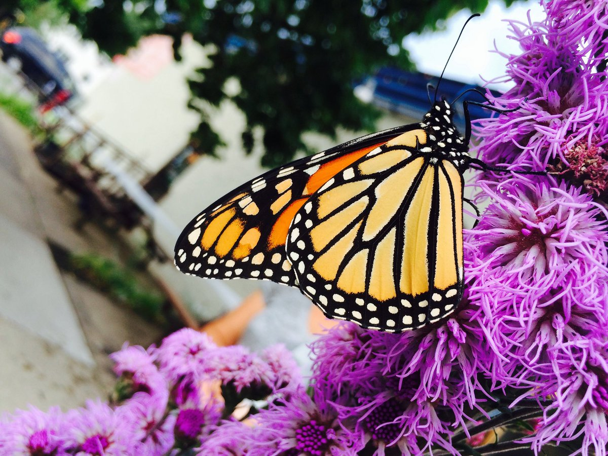 Did you hear what all the #buzz is about?! The @mndnr is hiring a #Pollinator Coordinator position. Applications open until 11/28.  Use the link below and click on &quot;external applicants.&quot; Then enter the Job Code: &quot;18026&quot; in the keyword box.   https:// mn.gov/mmb/careers/se arch-for-jobs/ &nbsp; … <br>http://pic.twitter.com/RyJk2GIC3C