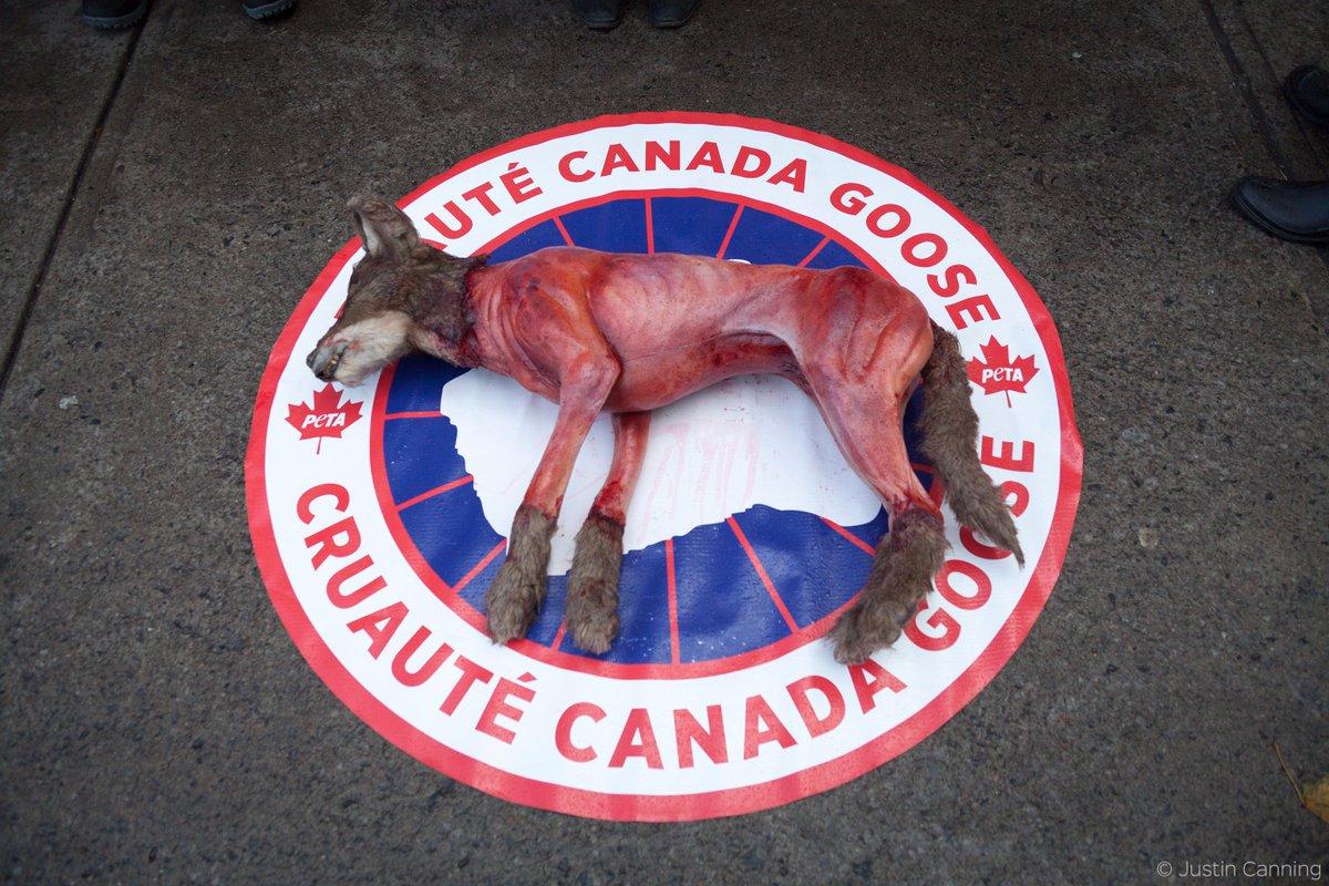 canada goose coyote fur peta