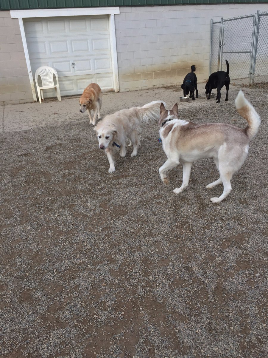 Brody leads Molly and Red on a stroll while Gus and Louis take a water break