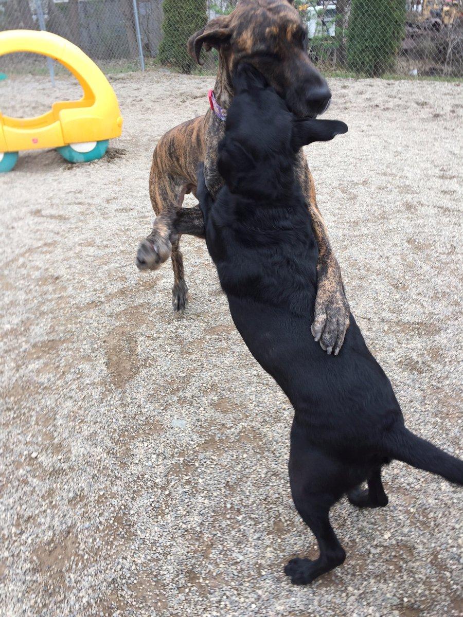 Heimdall gives Maizy a hug