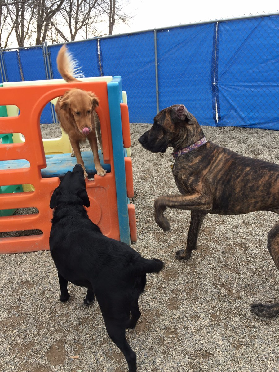 Heimdall and Maizy ask Maggie Mae to play