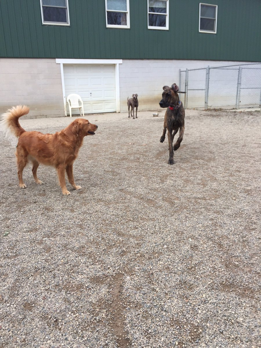 Heimdall shows Maggie Mae and Stitch how fast he is
